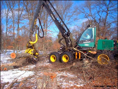 Figure 6: Harvesting operations in a red oak stand. If a healthy oak is too close to an infected oak then the trenching line should be beyond the healthy oak which should subsequently be removed. Photo credit Bill Cook.