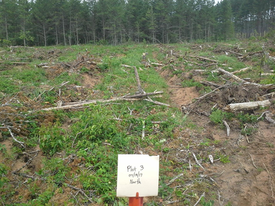 One of the control plots in 2017, post disc-trenching.