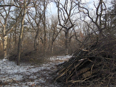 Figure 3: The treatment area after the buckthorn removal.