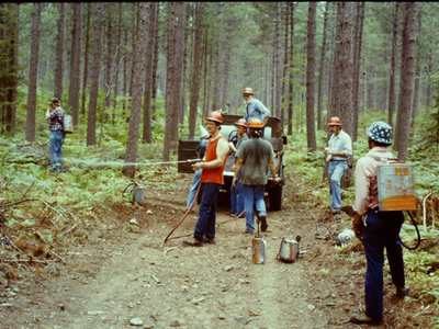 A 1984 photo showing a prescribed burn after the restoration treatment described here.