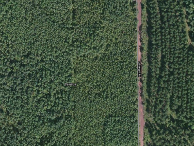 CFC birch trials growing season aerial photo from Google Maps