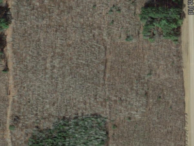 CFC birch trials leaf-off photo from Google Maps