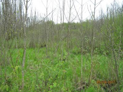 Strip clearcut treatment in a swamp hardwood forest