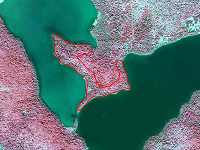 Color infrared aerial imagery showing the treatment area outlined in red, on a peninsula in the middle of a lake.