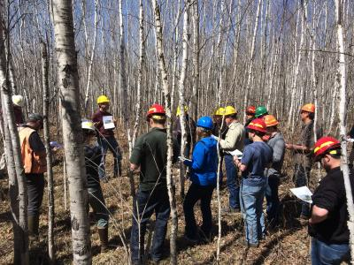 Group touring the CFC birch trial site, April 2015