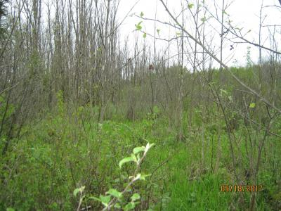 Strip clearcut in swamp hardwood, Price County, WI