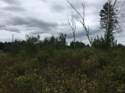 Shrubs and trees on the burned site in 2016