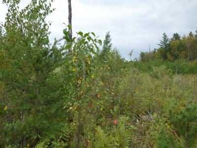 shrubs and trees in 2016 on the unburned species/area plot