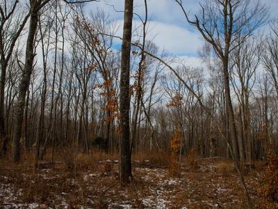 Figure 2. Residual stem density after a shelterwood harvest of a red oak stand that took place in 2013.