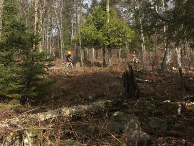 Contractors using clearing saws to cut dense brush in an opening in the forest canopy.