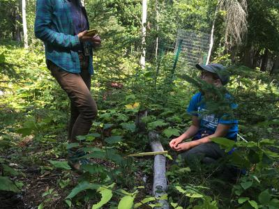 Two ecologists conducting regeneration surveys during the growing season.