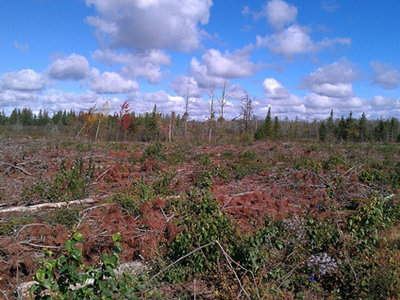 Figure 4: Post-harvest photograph of the full-tree skid with slash hauled back to site (medium slash retention) treatment area from the south looking north. Picture taken in 2012.