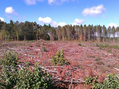 Figure 3: Post-harvest photograph of the harvest area in 2012. The processed at the stump/full slash retention treatment in the foreground. Image collected facing west while standing on the from forest road.