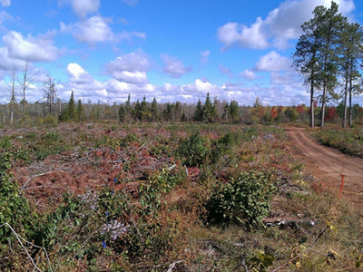 Figure 5: Post-harvest photograph in 2012 of the processed at stump/full slash retention treatment area from the south looking north.