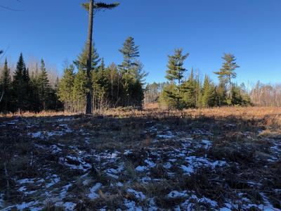 Looking west across site with a good view of mixed pine balsam advanced regeneration and reserve white pine