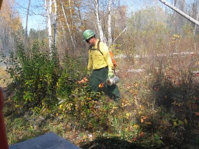 Firefighter ignites grass and shrubs with a drip torch.