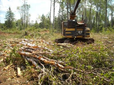 Timber harvest large gap with coarse woody debris retention