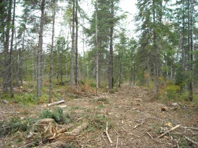 Post-harvest shelterwood with small gap regeneration of spruce, white pine, and cedar