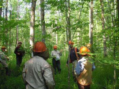 Staff from USFS Northern Research Station and Chippewa National Forest in black ash swamps prior to treatment