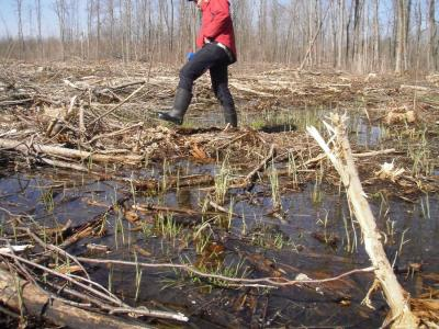 Clearcutting treatment immediately post-treatment (spring 2012)