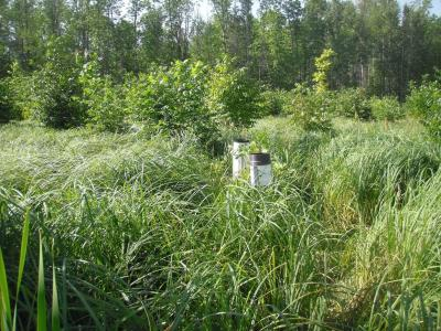Clearcutting treatment with monitoring well in August 2013