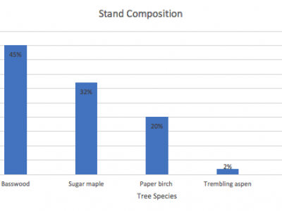Basswood makes up 45% of the stand composition, sugar maple 32%, paper birch 20%, trembling aspen 2%, and red oak 1%.