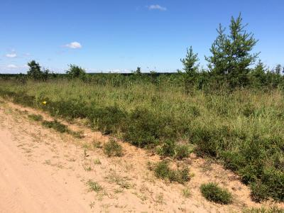 Roadside showing sandy soils typical of Barnes Barrens