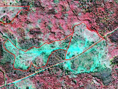 Color infrared aerial imagery showing the treatment area outlined in red.