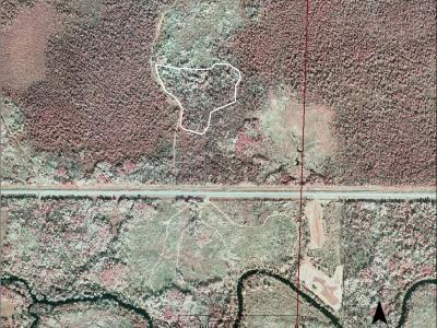 2010 infrared aerial photo of interplanting site before 2011 harvest.