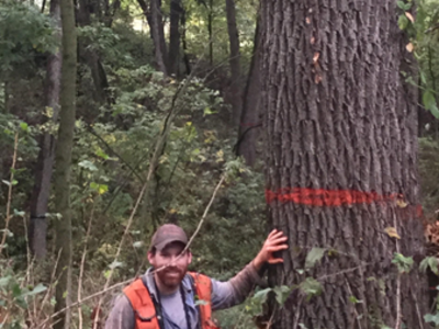 Figure 6: WI DNR forester Cody Didier next to a large walnut tree.